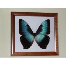 Картина «Бабочка», 1 шт