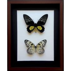 Панно из двух тропических бабочек, 1 шт